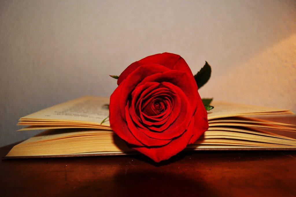 rosa encima de un libro.